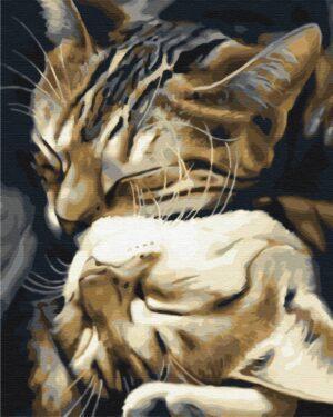Картина по номерам Спящие котики (Brushme BS29747)